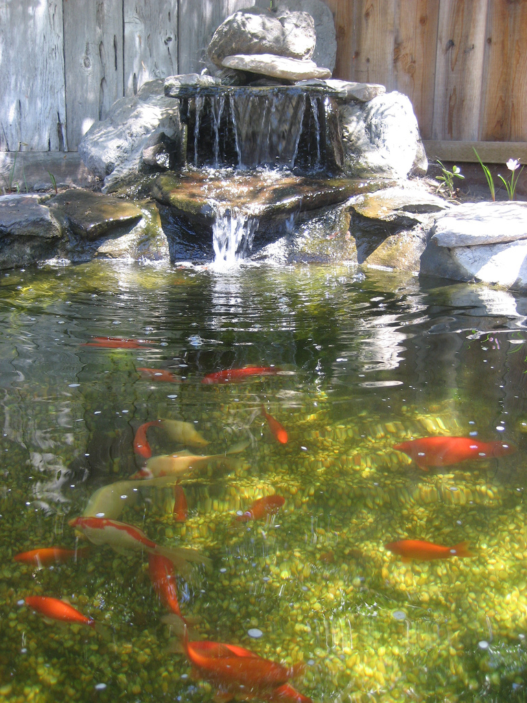 Pools spas us new construction supplies services c for Fish pond materials
