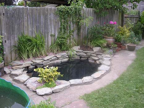 Pools spas us new construction supplies services c for Backyard fish pond designs
